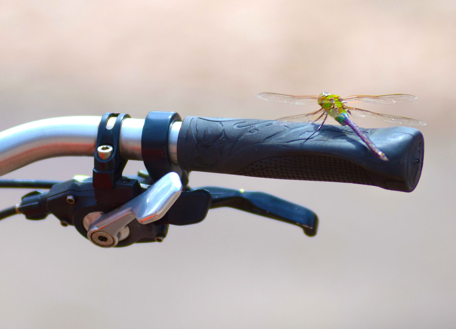 Dragonfly lands on handle bar of bicycle